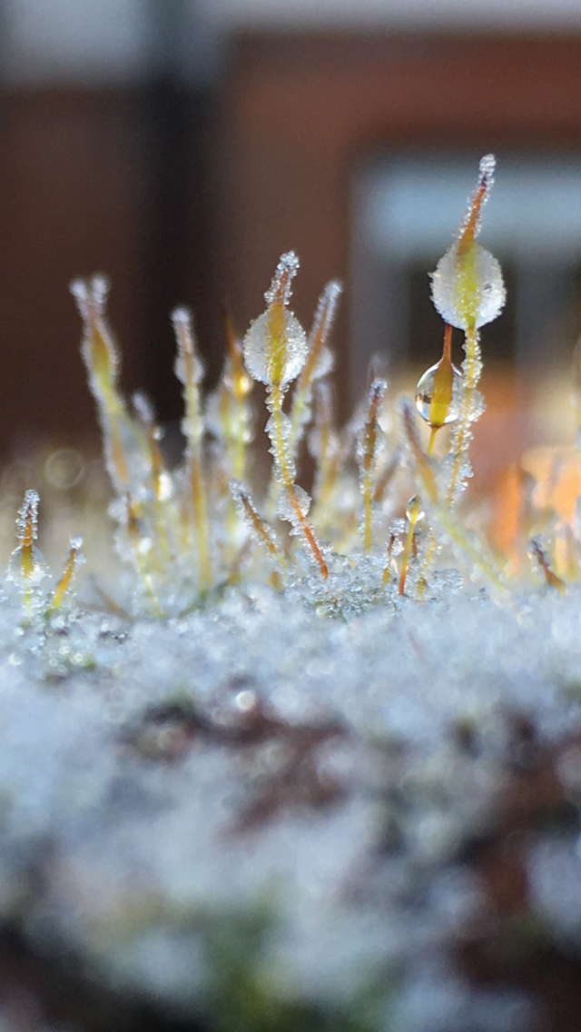 Icy Moss in the morning Betty Adamou